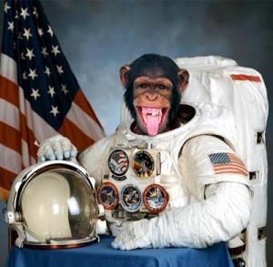 Chimpansee Ham